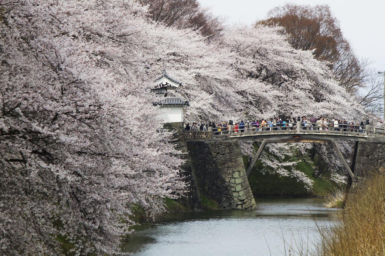 霞城大手門の桜(霞城公園)