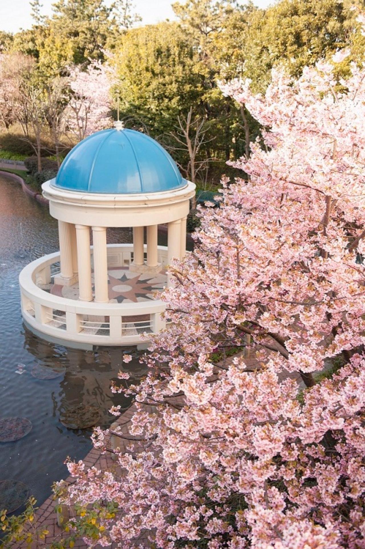 イクスピアリ 桜