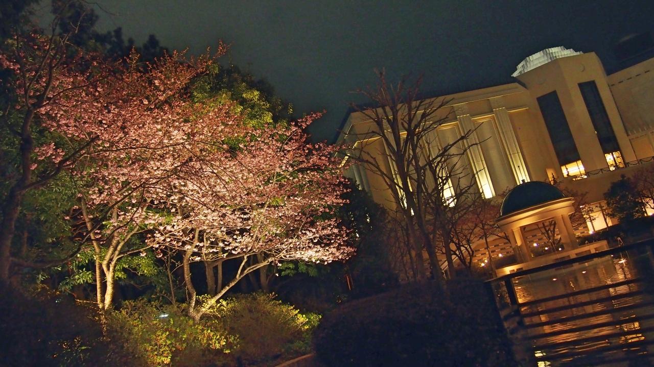 桜 ライトアップ