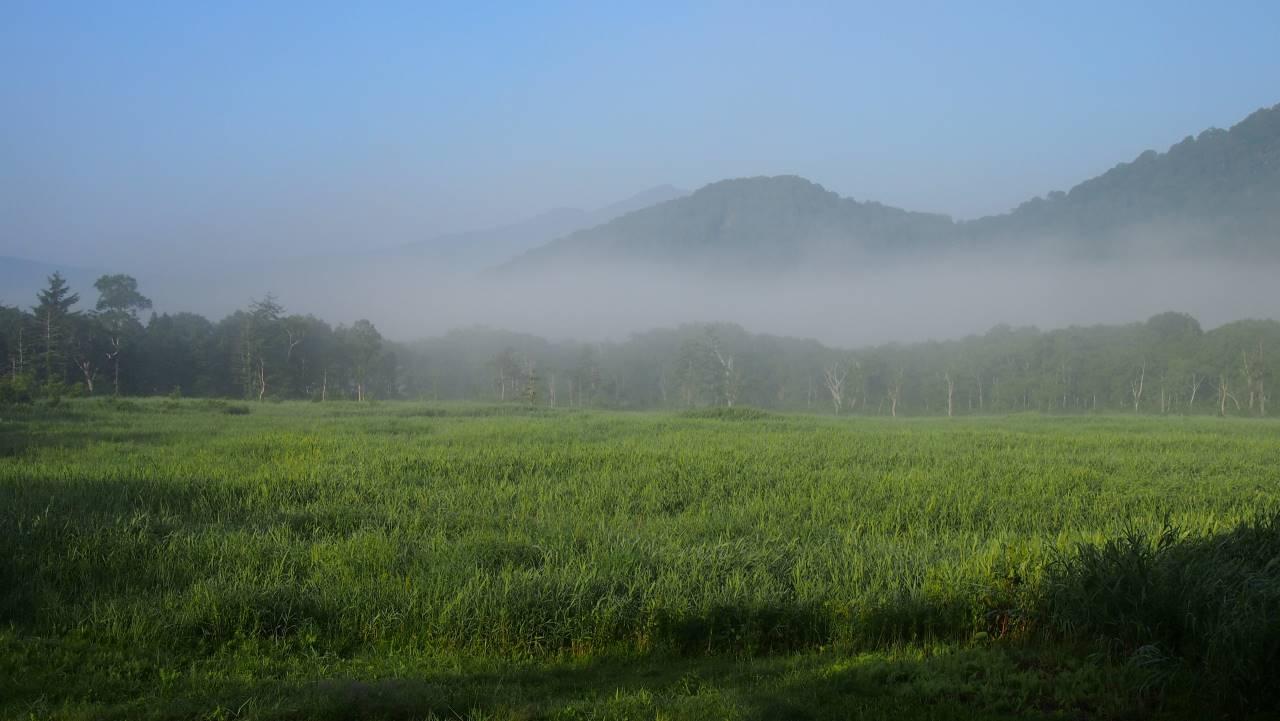 朝霧の湿原