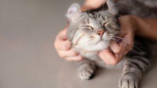 雑種猫が人気
