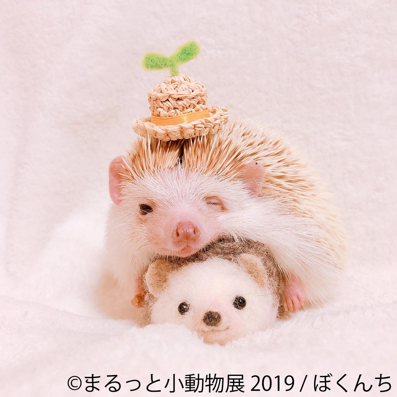 可愛くて癒される!ハリネズミやハムスターが主役の「まるっと小動物展」開催