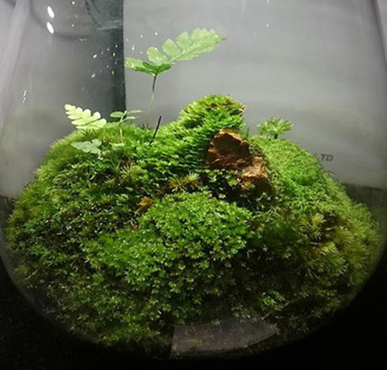 六甲高山植物園「初夏の高山植物展」