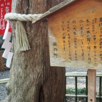 共生の木案内板