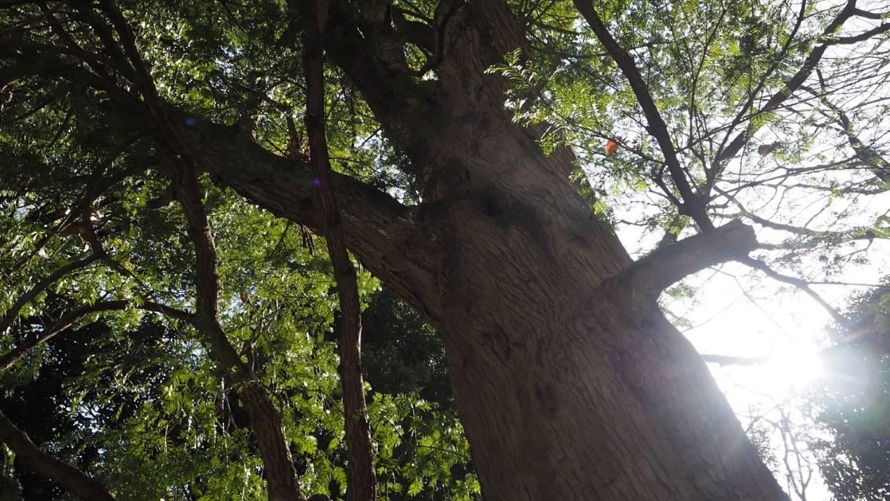 共生の木逆光