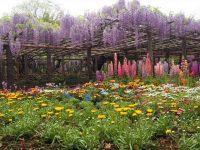 園内の花花