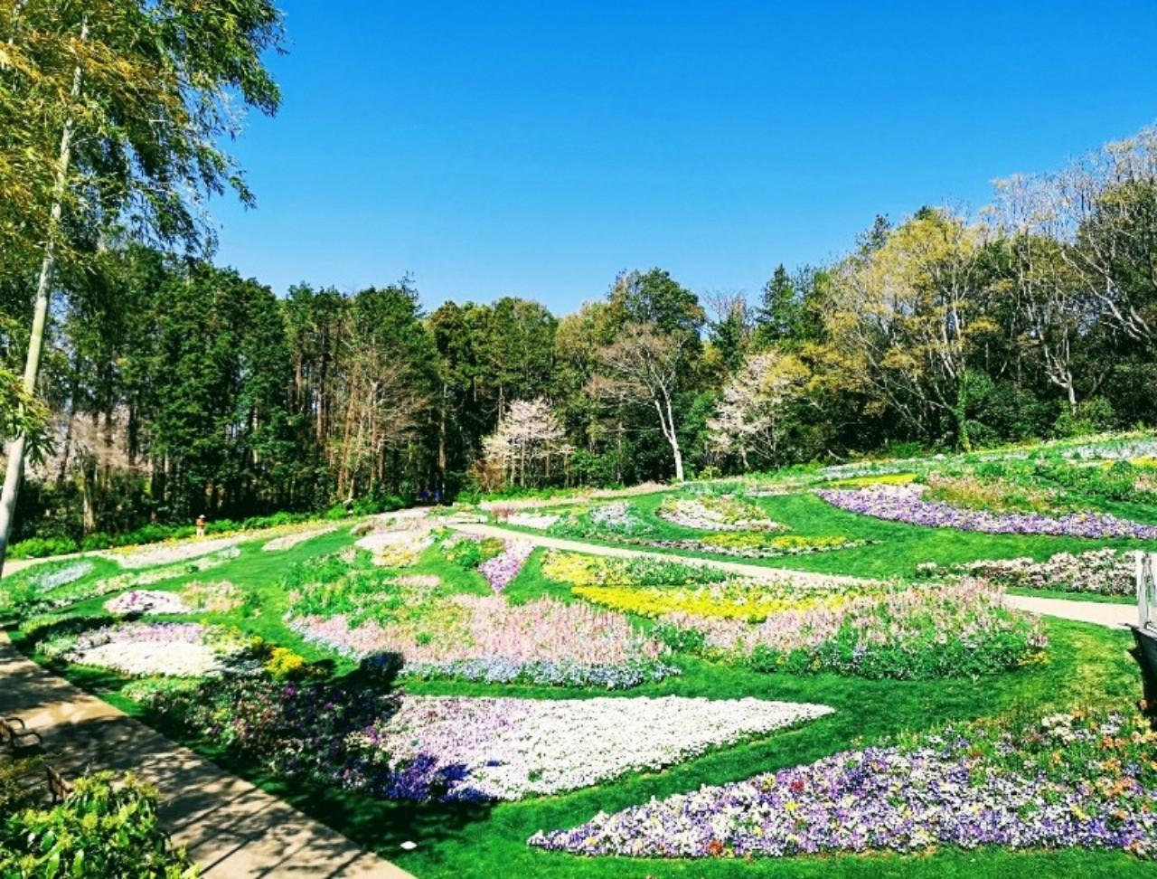 里山ガーデン大花壇2