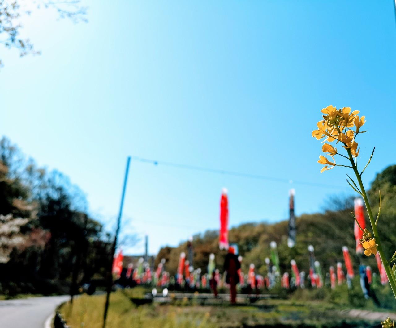 里山ガーデン菜の花
