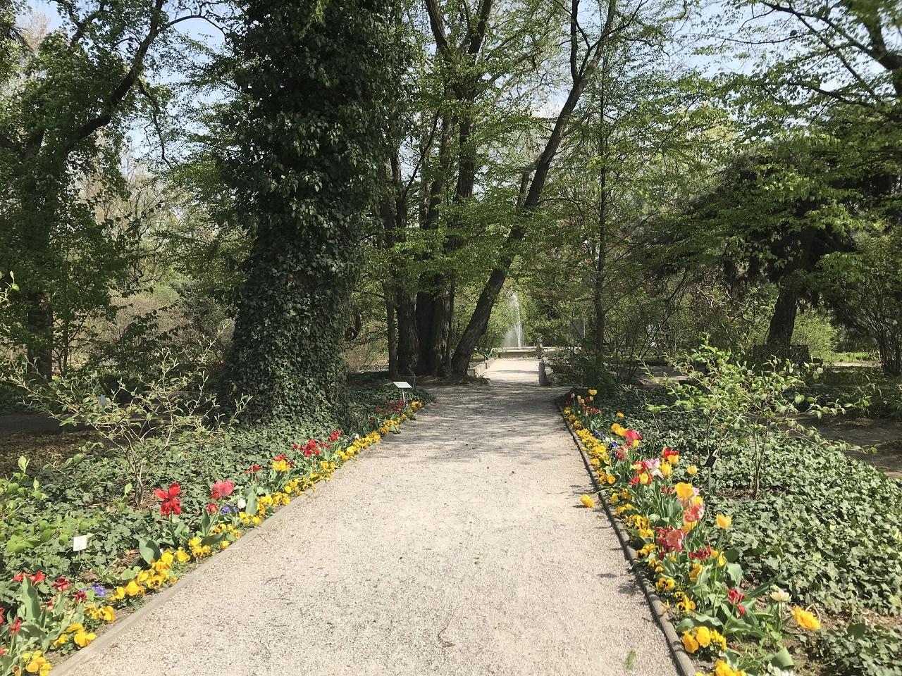 ワジェンキ公園内の植物園