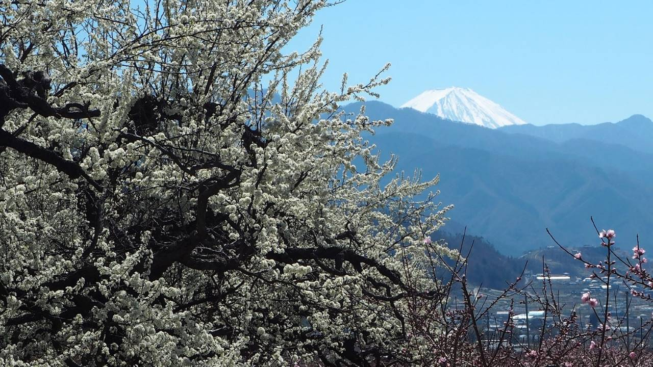 梅越し富士山