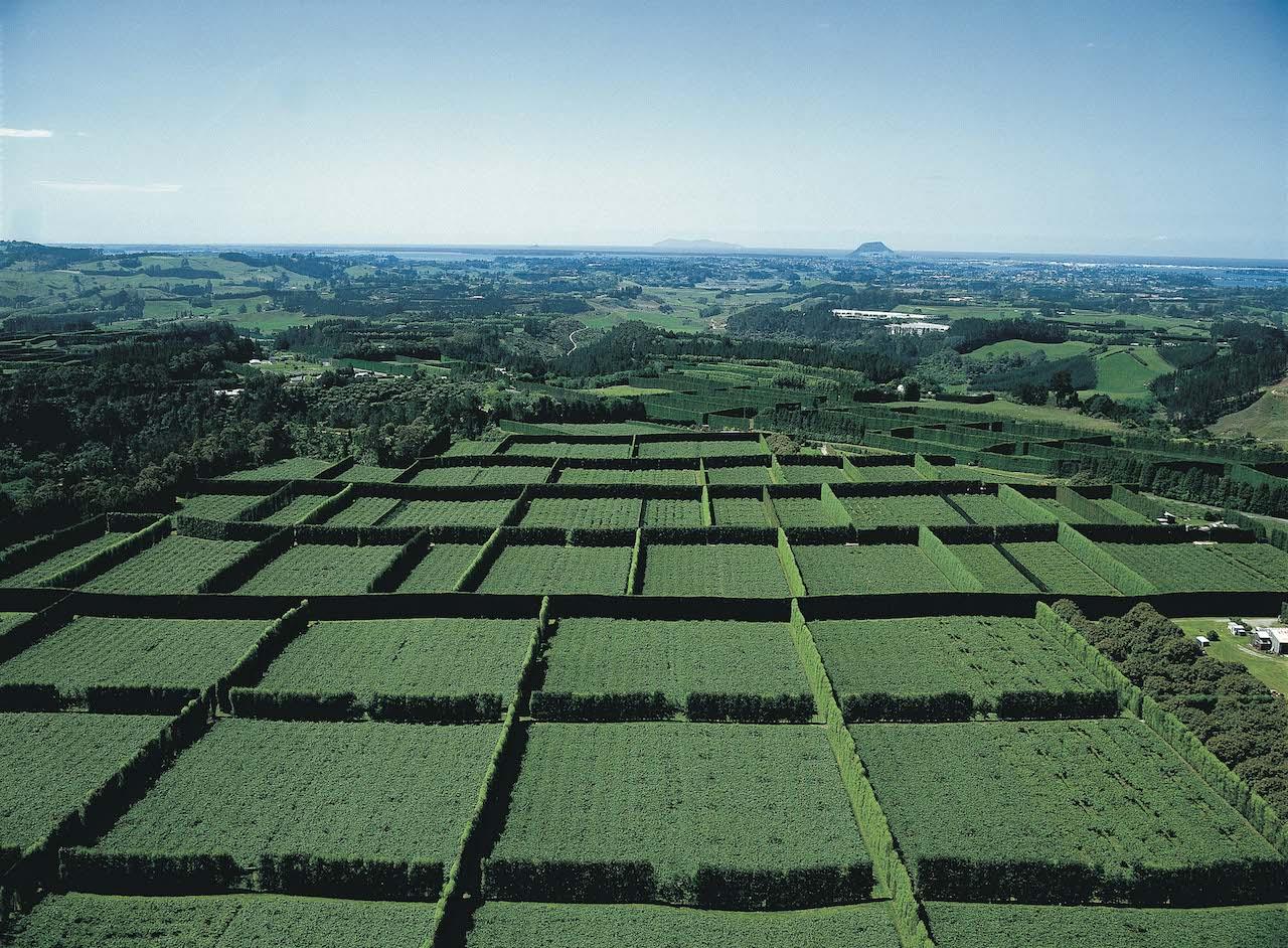 キウイ農園