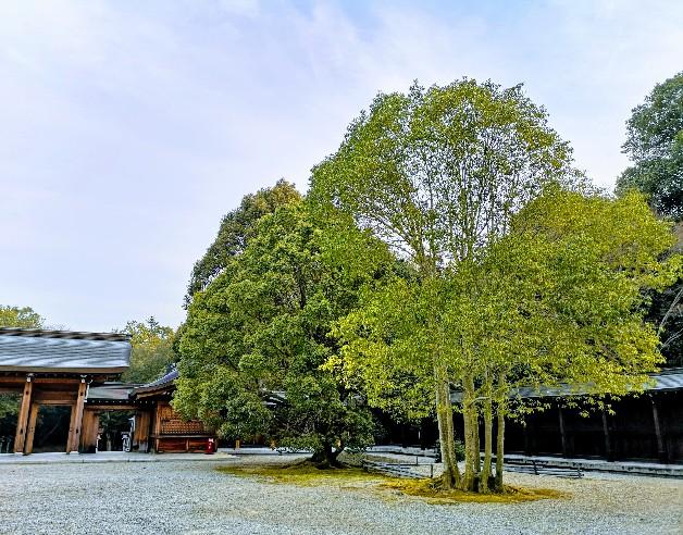 橿原神宮木々