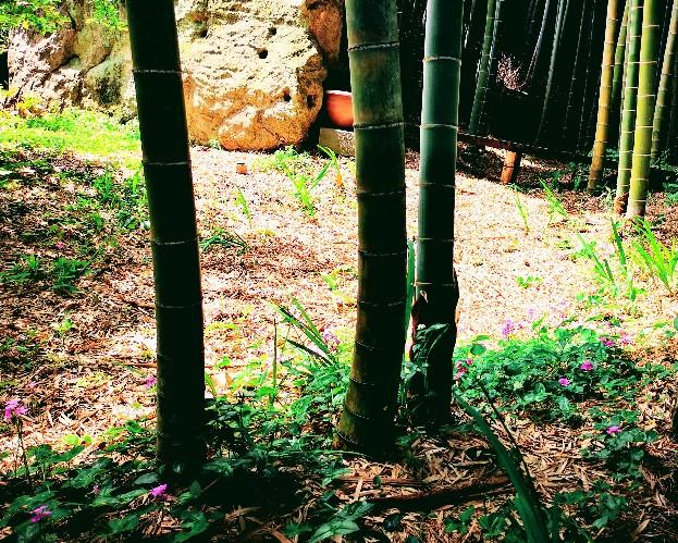 英勝寺竹林と花
