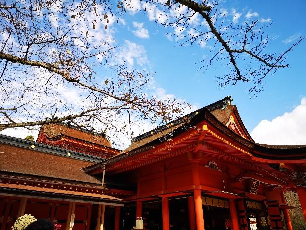 浅間大社本殿と桜