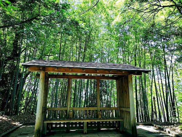 亥鼻公園竹林