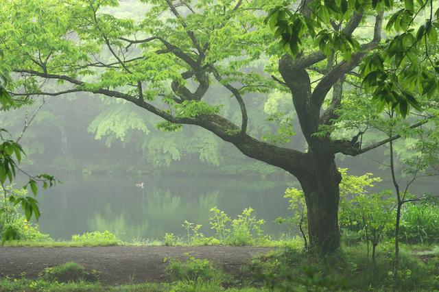 雲場池(軽井沢)