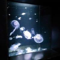 加茂水族館クラゲ2