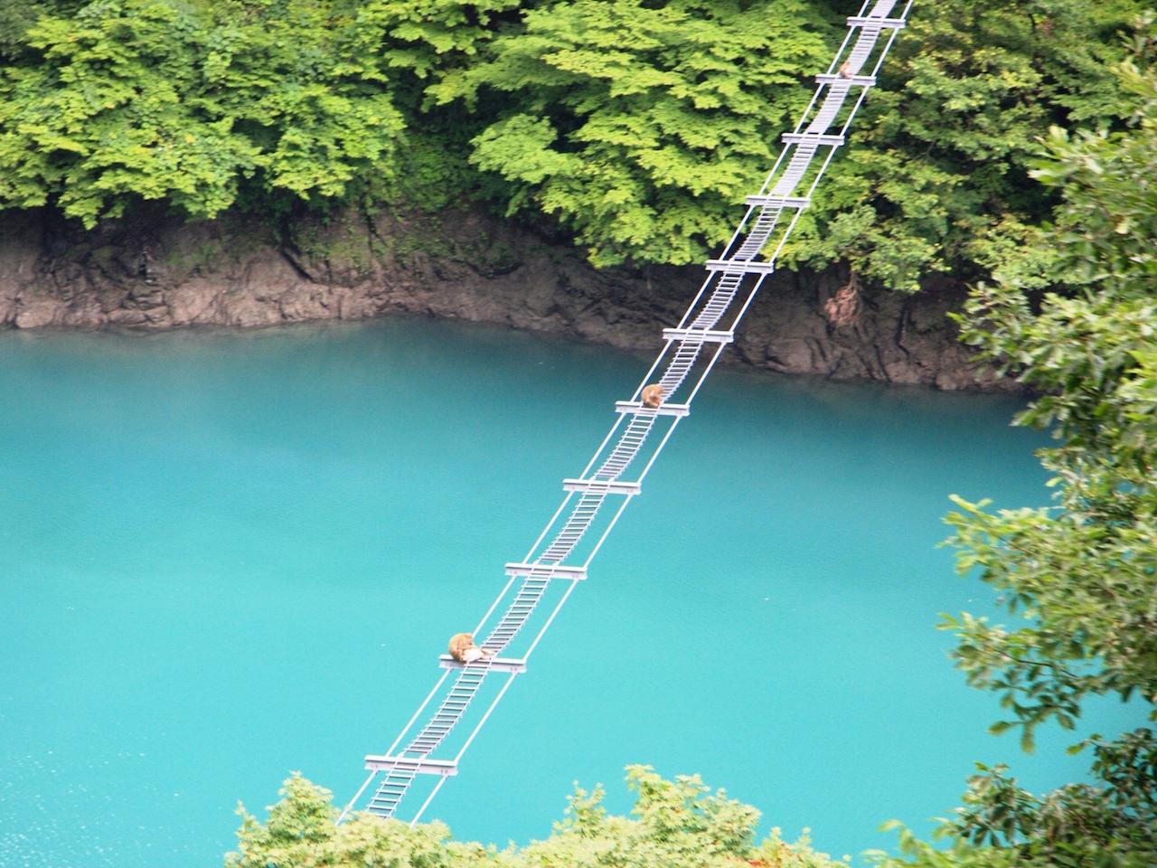 猿のつり橋
