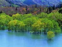 白神山地 青森県