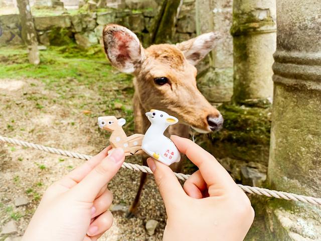 鹿と鹿みくじ