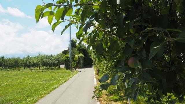 リンゴ園の小径