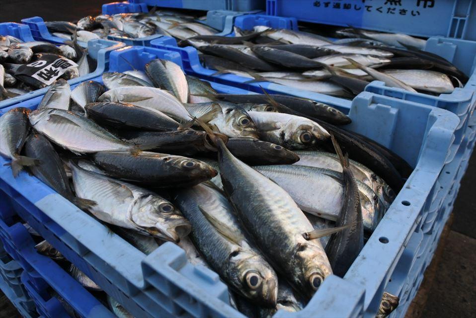 松浦魚市場