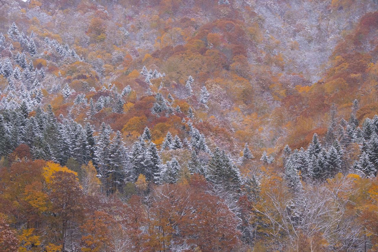 雪紅葉 定山渓
