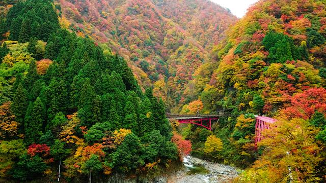 【全国紅葉の絶景】トロッコ電車で揺られて行く、富山県の紅葉人気スポット