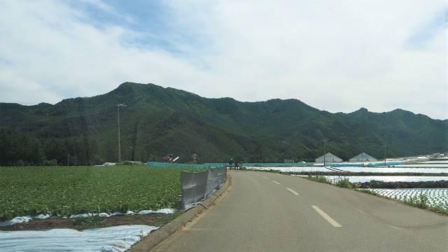 レタス畑①