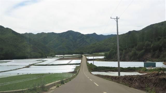 レタス畑②