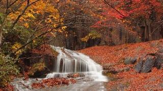 奥岳・あだたら渓谷自然遊歩道紅葉