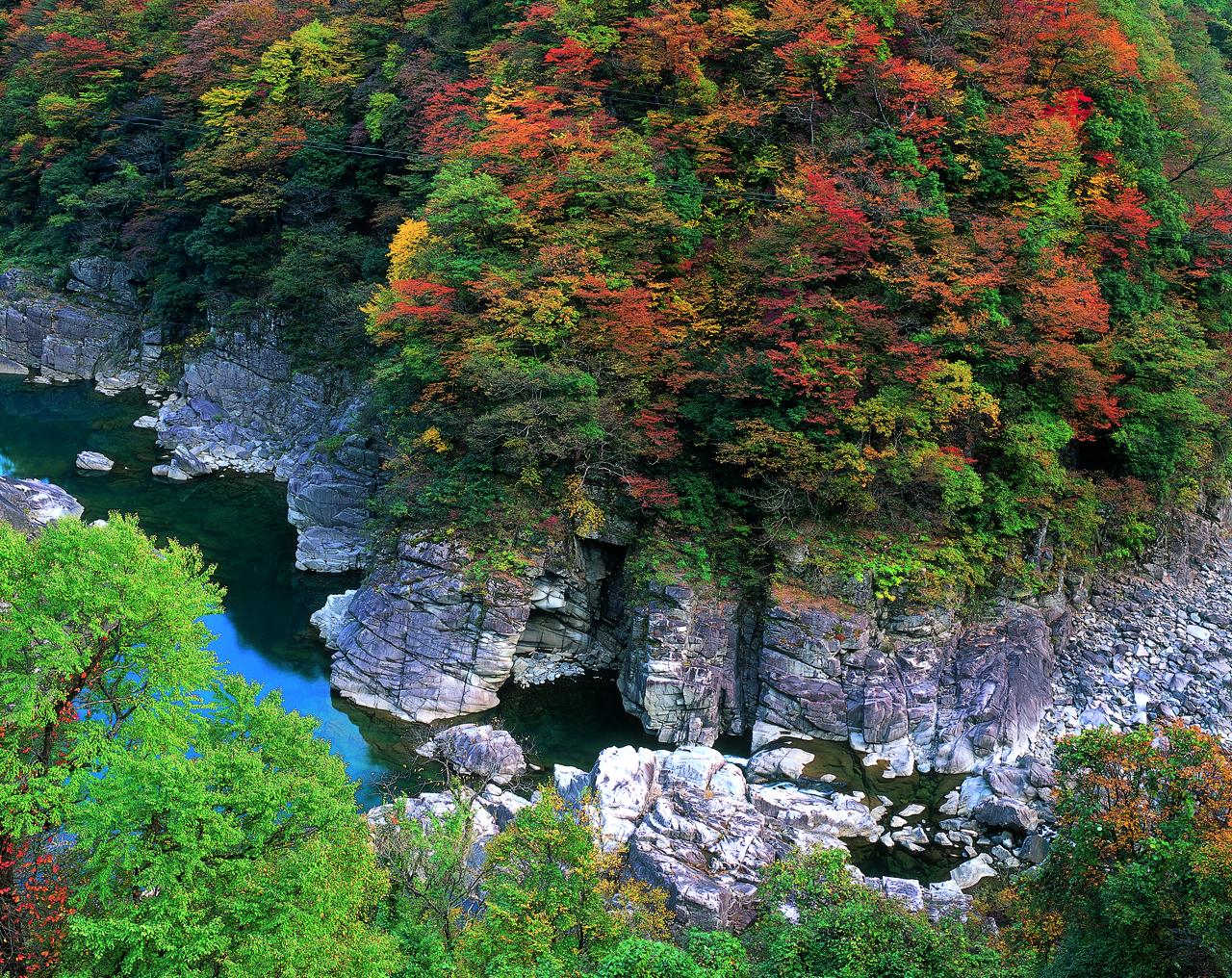九頭竜峡 紅葉1