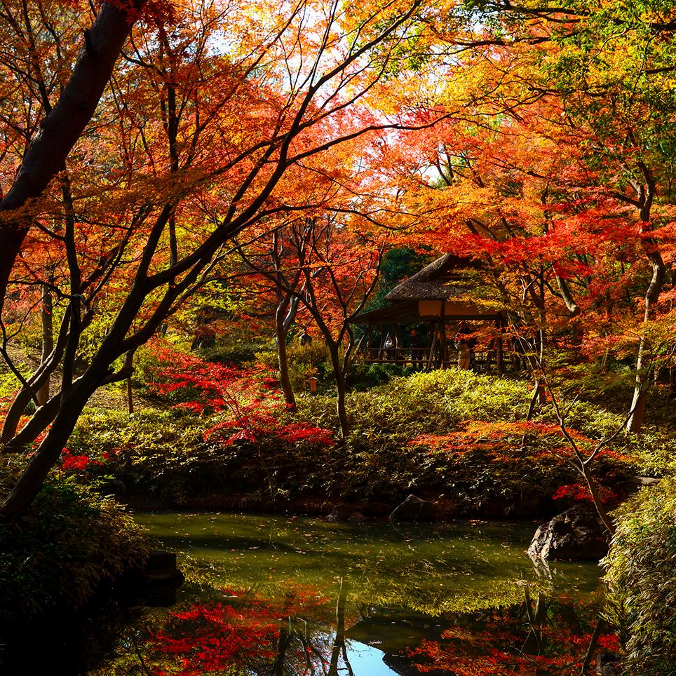 東京 六義園