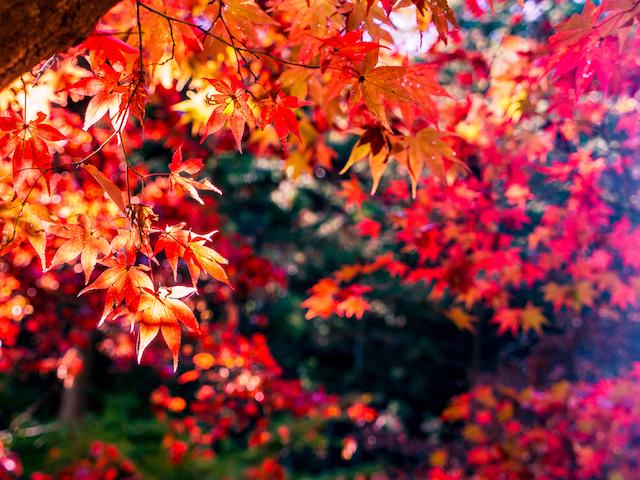 【全国紅葉の絶景】ゆっくりのんびり見たい、埼玉県の紅葉人気スポット