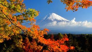 静岡 富士山と紅葉