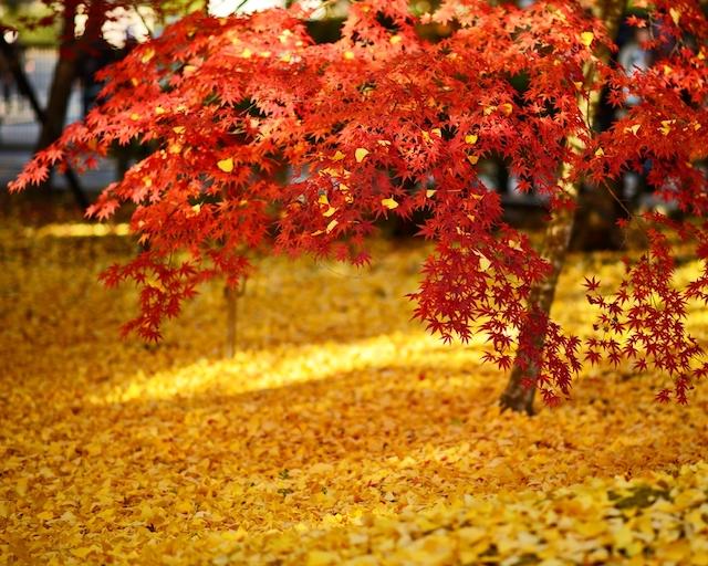 【全国紅葉の絶景】胸が痛くなるほど美しい、京都洛東の紅葉人気スポット