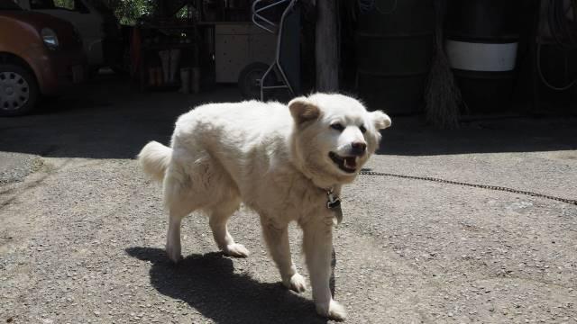 愛犬ラッキー