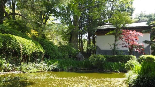 裏庭の池と蔵