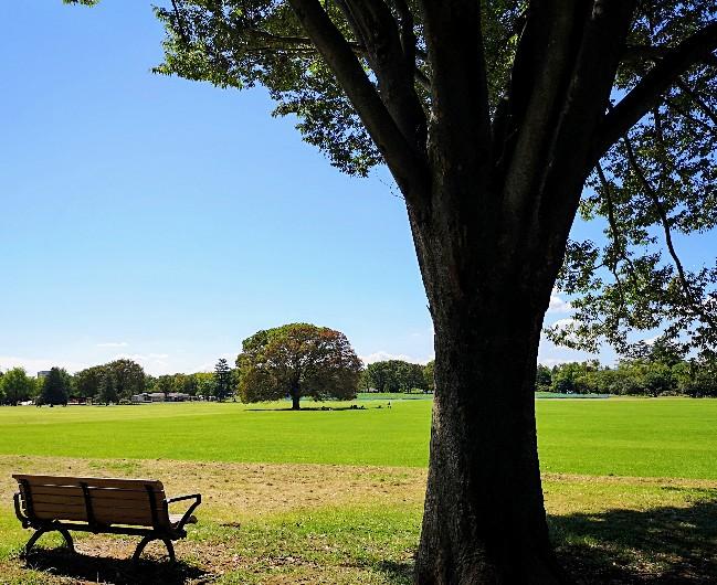 国営昭和記念公園みんなの原っぱ大ケヤキとベンチ