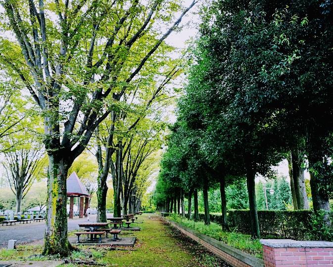 都立秋留台公園園内並木