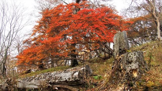 山道の紅葉
