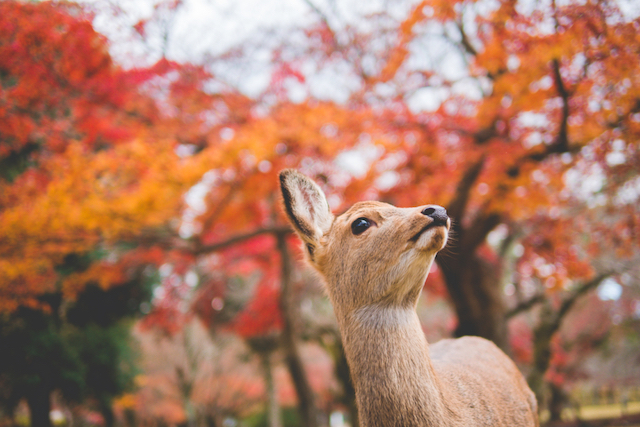 【全国紅葉の絶景】歴史が息づく、奈良県の紅葉人気スポット