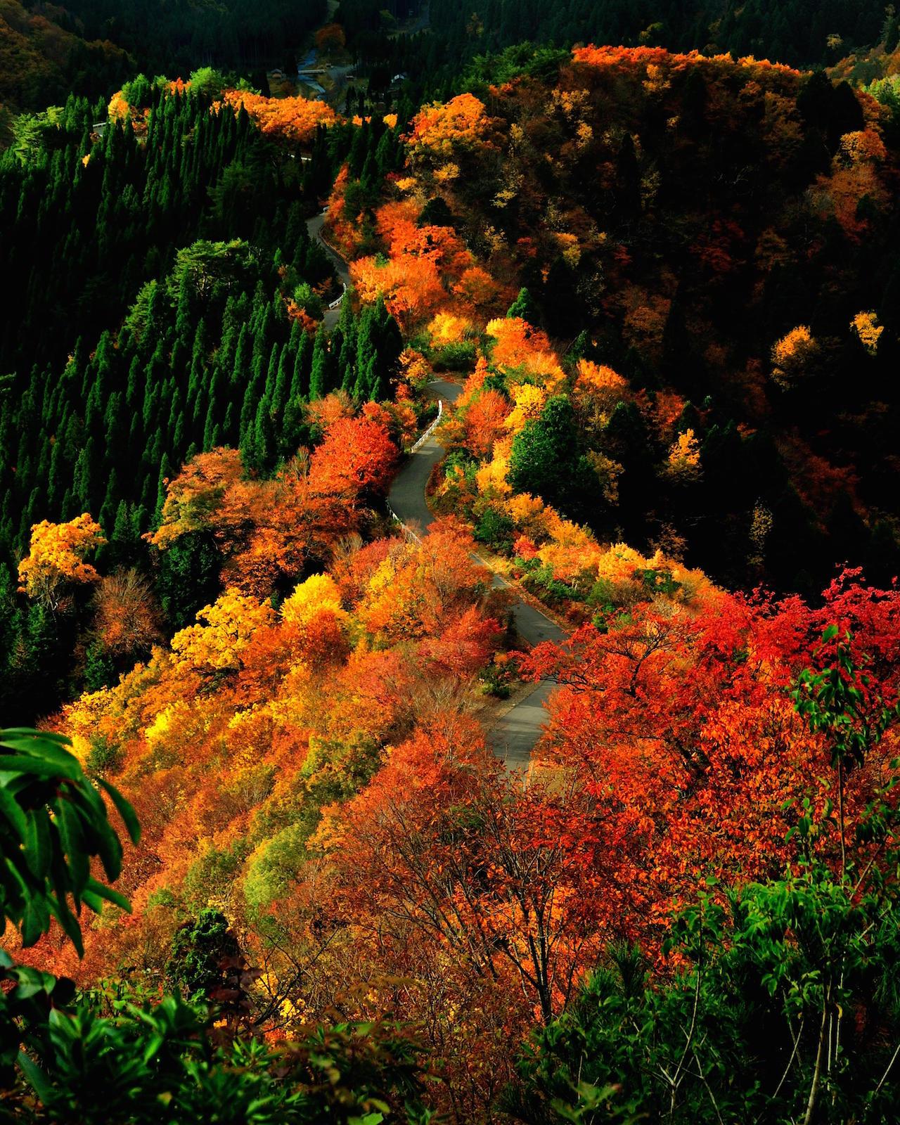 小入谷の紅葉
