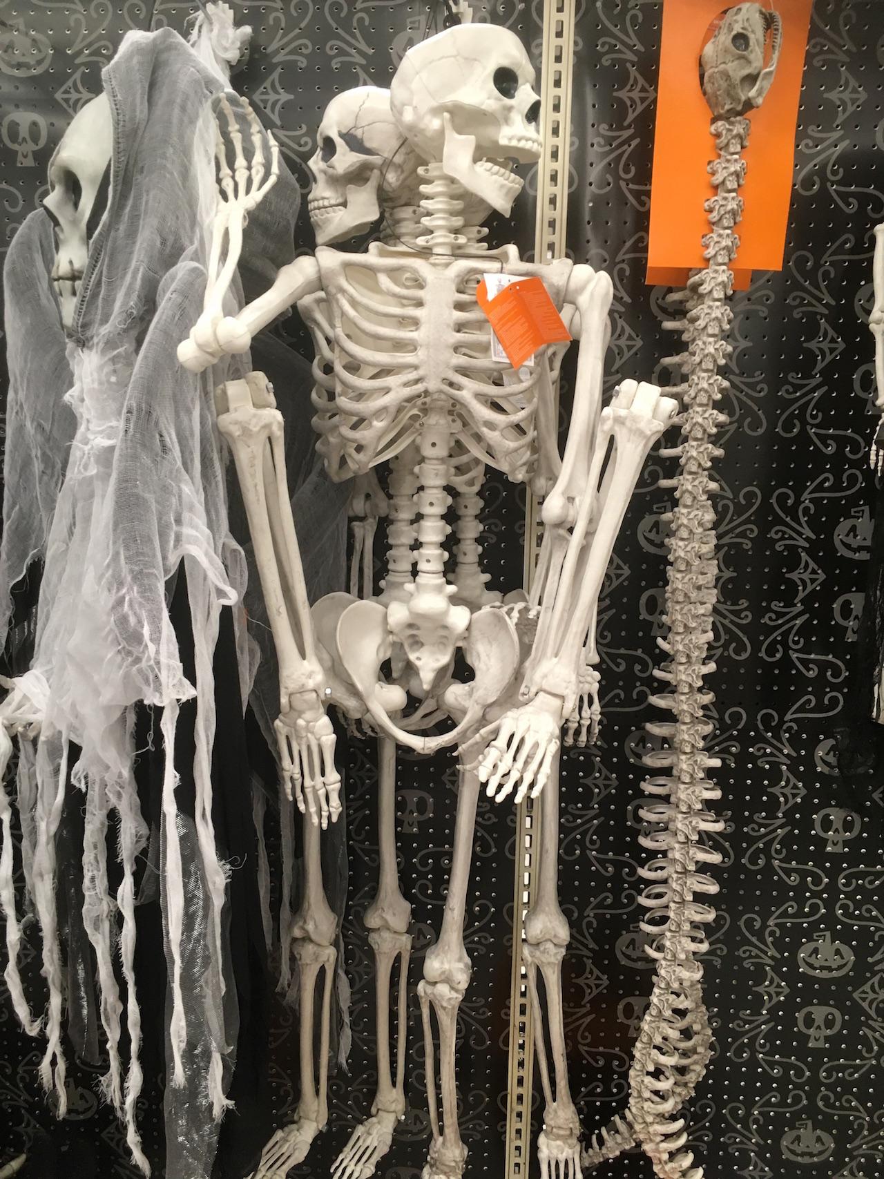 ハロウィン 骸骨