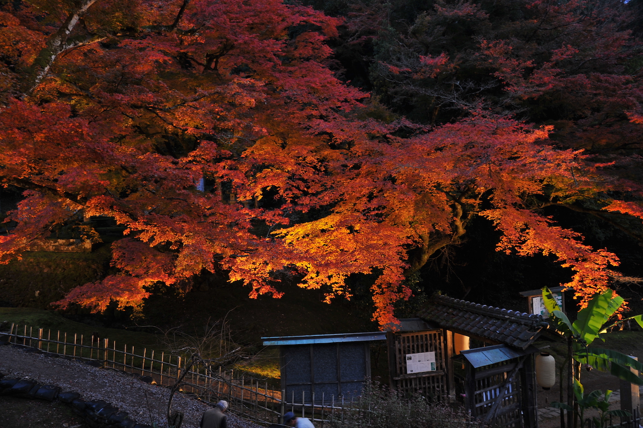 鳥取県藩主池田家墓所 ライトアップ