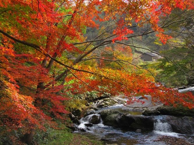 紅葉の八重滝(紅葉滝)