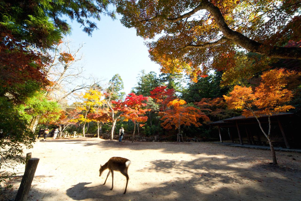 【全国紅葉の絶景】焦がれて待っていた、広島県の紅葉人気スポット