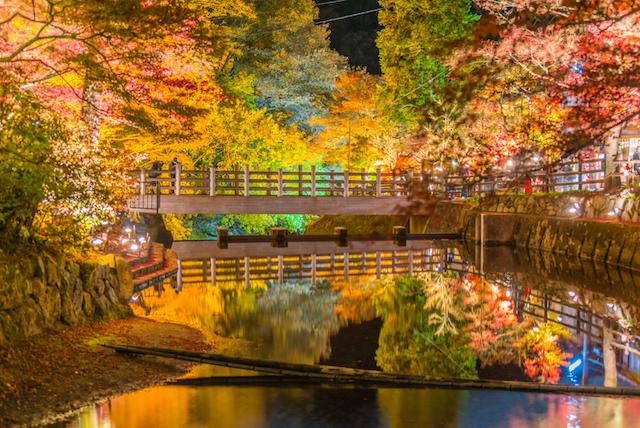 岩屋堂公園 ライトアップ