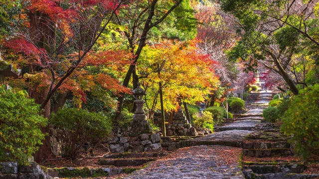 【全国紅葉の絶景】赤の余韻が残る、福岡県の紅葉人気スポット青山 沙羅