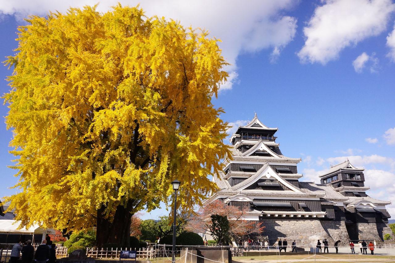 【全国紅葉の絶景】紅葉の海に浮かぶ、熊本県の紅葉人気スポット